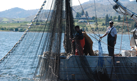 The Syilx fishermen provide for their famililes