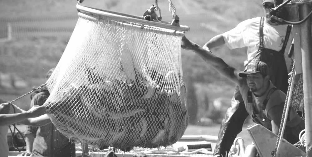 Okanagan Nations Commercial Fisheries Seine Net Fishing