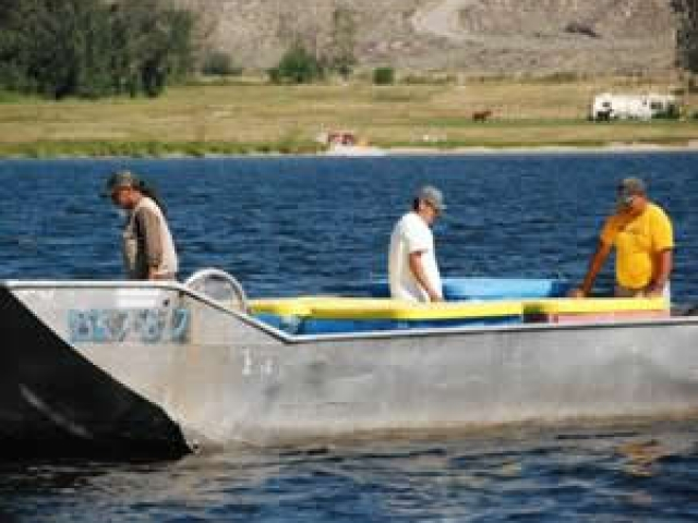 Selective fisheries on Osoyoos Lake