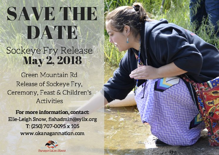 Okanagan Nation Alliance's 2018 Sockeye Fry Release
